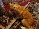 Кот под кайфом)))